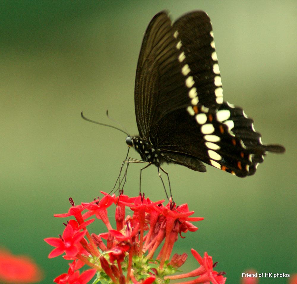 Photographic Wildlife Stories In UK/Hong Kong: Beautiful