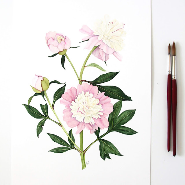 peonies, painting, watercolor, botanical painting, botanical watercolor, watercolor peonies, Anne Butera, My Giant Strawberry