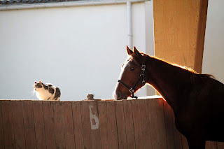 Chat et cheval.