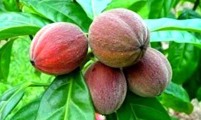 https://ghan-noy.blogspot.com/2018/08/inilah-ramuan-tradisional-nenek-moyang.html
