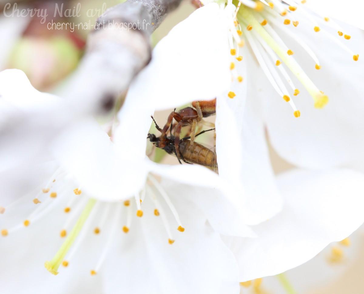 photo macro insectes