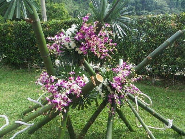 Орхидеи на бамбуковых палках
