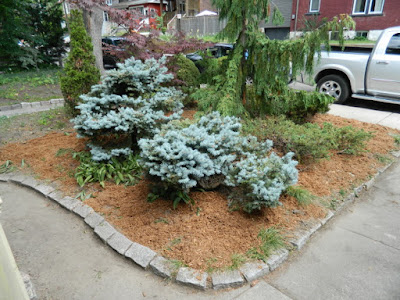 Leslieville Toronto front garden summer cleanup by Paul Jung Gardening Services after