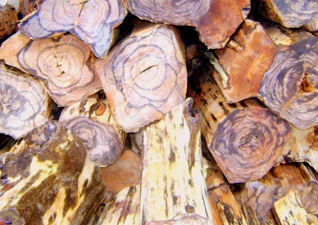 Apa sebabnya kayu gaharu bernilai jual tinggi?