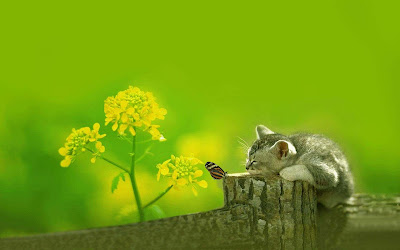 Cats_wallpapers-hdimages