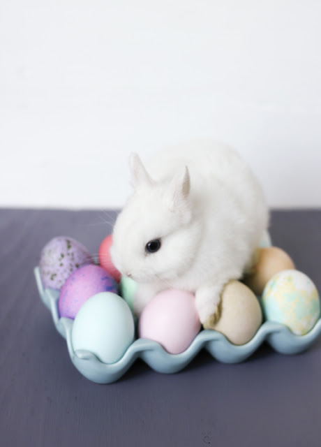 Always With Butter: Easter Eggs & Baby Bunnies