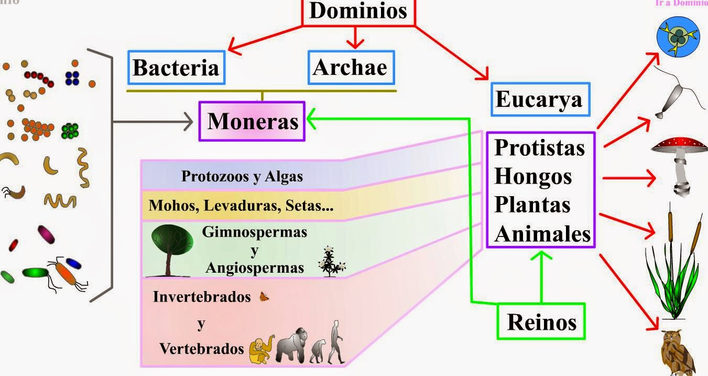Cinco reinos dos seres vivos