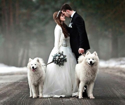 Beautiful winter scene with dogs in snow and married couple