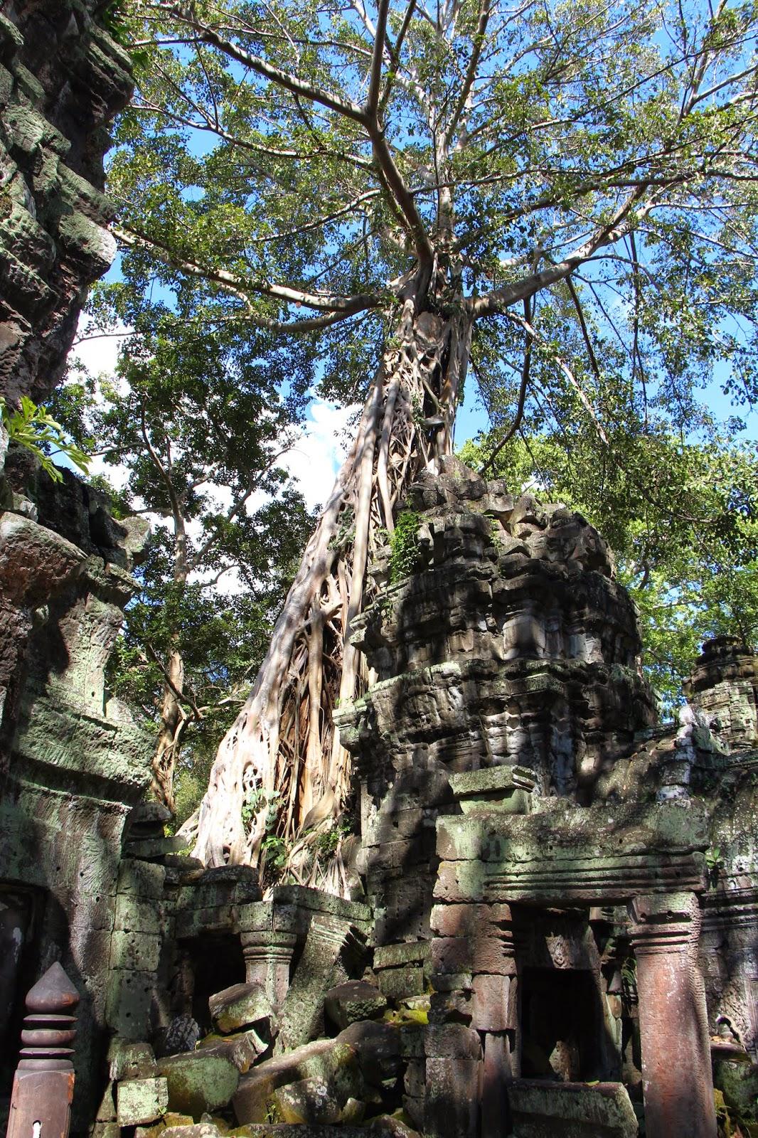 Ta Phrom Angkor Cambodia