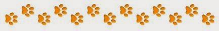 brown paw print divider