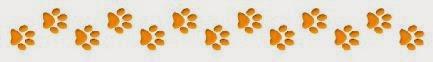 Light brown dog paw prints