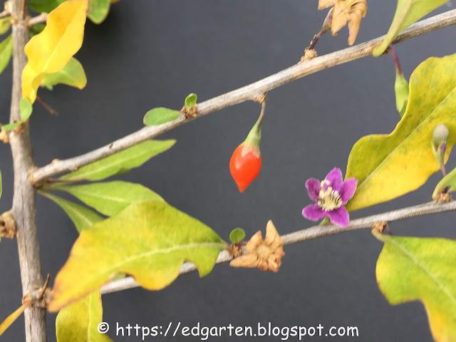 Wer kennt diese Pflanze