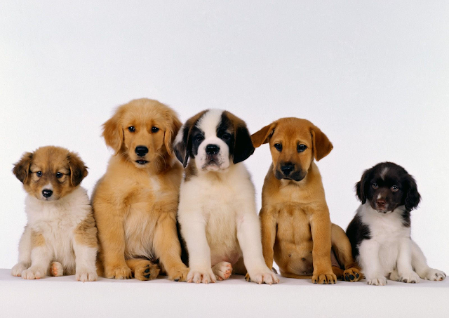 The Animals Hd Wallpapers Dogs Image Photos