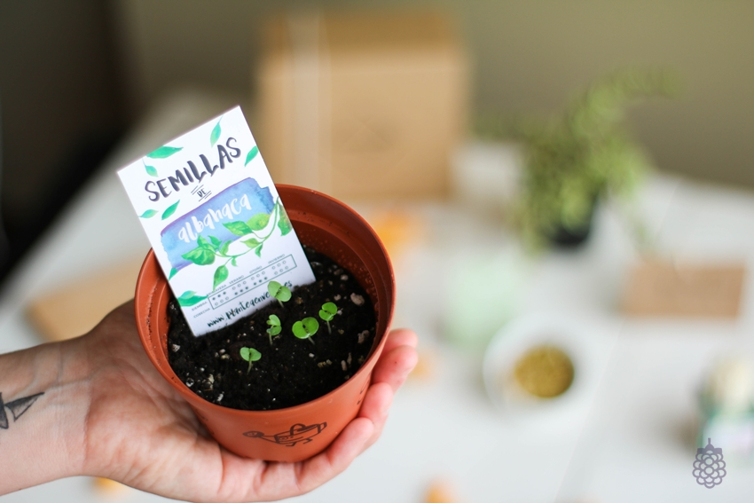 greenmood box kit de cultivo plantea en verde