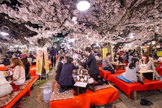 Hanami festival celebrating the season of spring