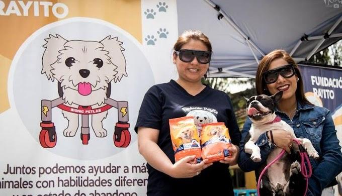 """Patatón 2018: La primera """"Teletón"""" en favor de los animales en Perú  FOTO"""