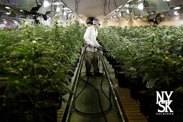 Macedonia is leading in the Balkans with Medical Cannabis Research and Production