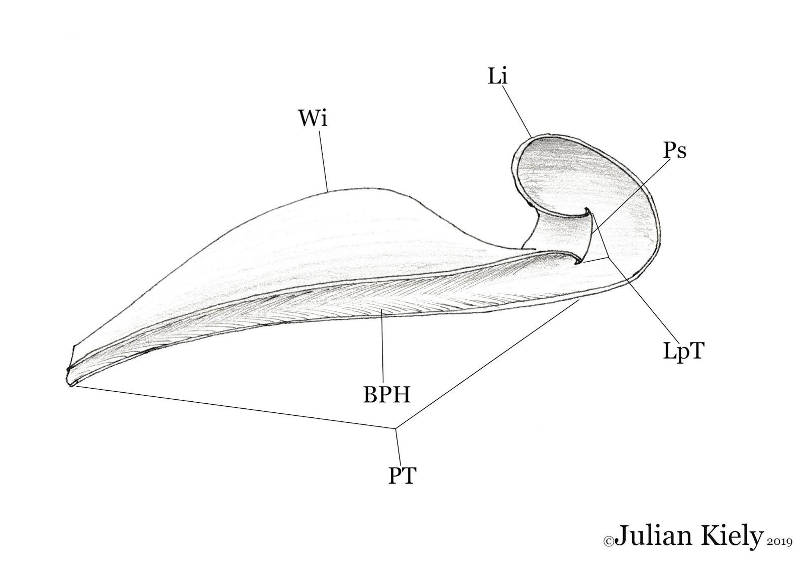 Carnivorous Plant Diversity And Evolution Part 1 An