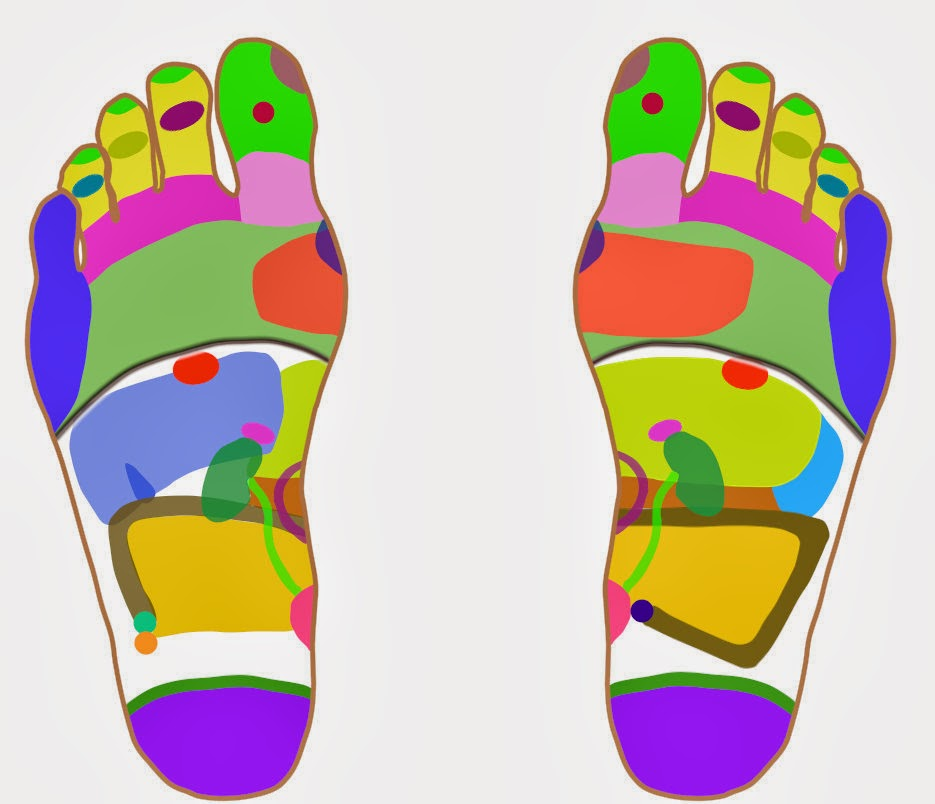 Reflexology explained, diagram of reflex points/areas on the feet, correspond with body parts