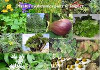Vapeur des plantes hydrate la peau