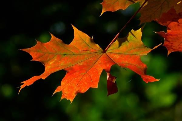 Dicas de cuidados com a pele no outono