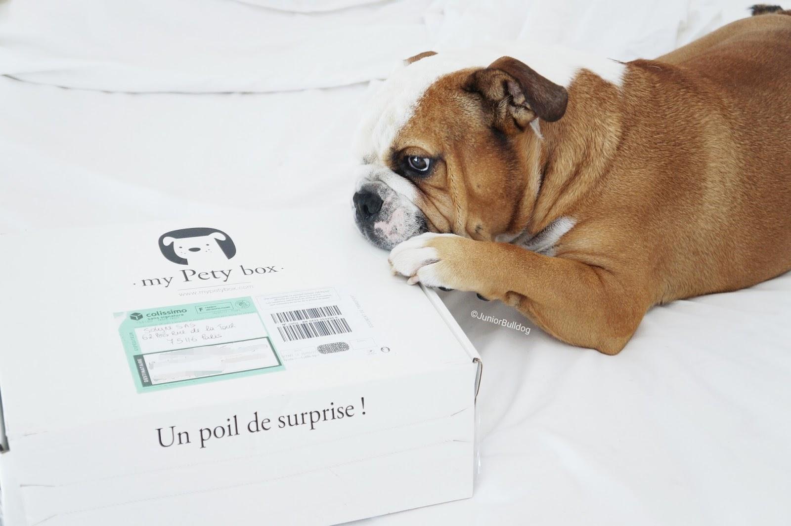 dog box box pour chien my pety box