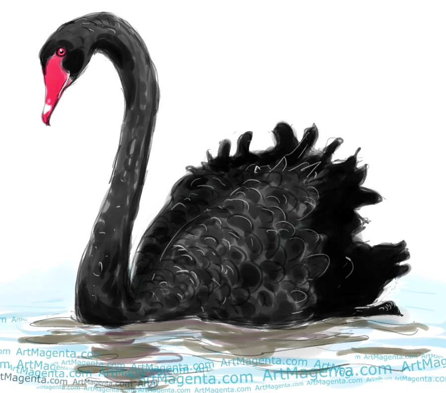 Black Swan sketch painting. Bird art drawing by illustrator Artmagenta