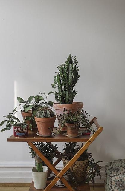 plantas-agrupadas-em-casa-decoracao