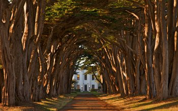 Wallpaper: Cypress Tree Avenue
