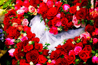 Valentine's Rose Day 2019