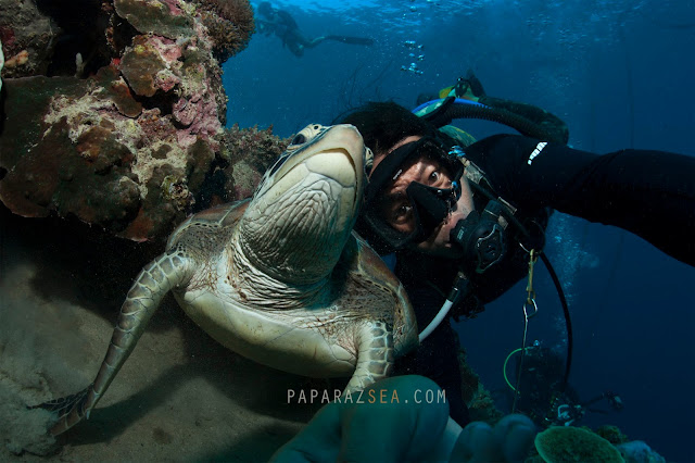 Scuba Diving, Underwater Photography,