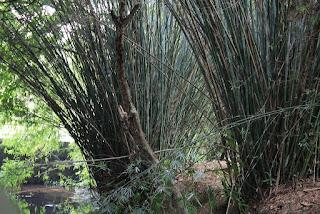 bamboo-and-farmer-bihar