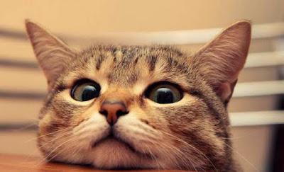 chat qui louche