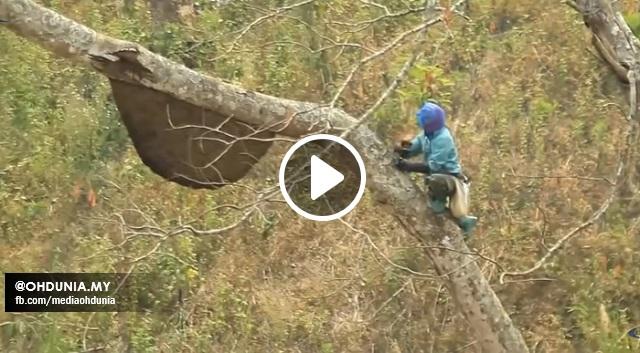 Lelaki ini Memanjat Pokok Tinggi, Lihatlah Apa Yang Dilakukan, Sungguh Mengerikan