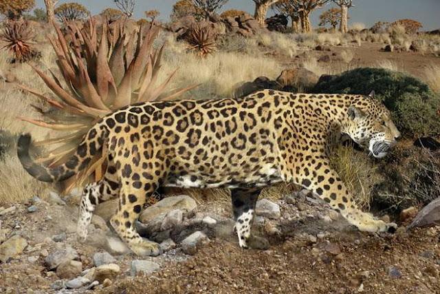 giant jaguar
