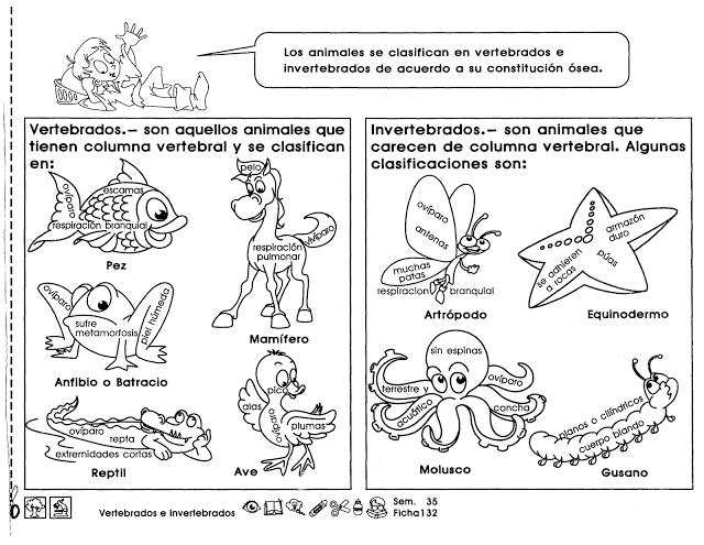 Dibujos Para Colorear De Animales Invertebrados Y Vertebrados: Fichas De Primaria: Ficha De Vertebrados E Invertebrados