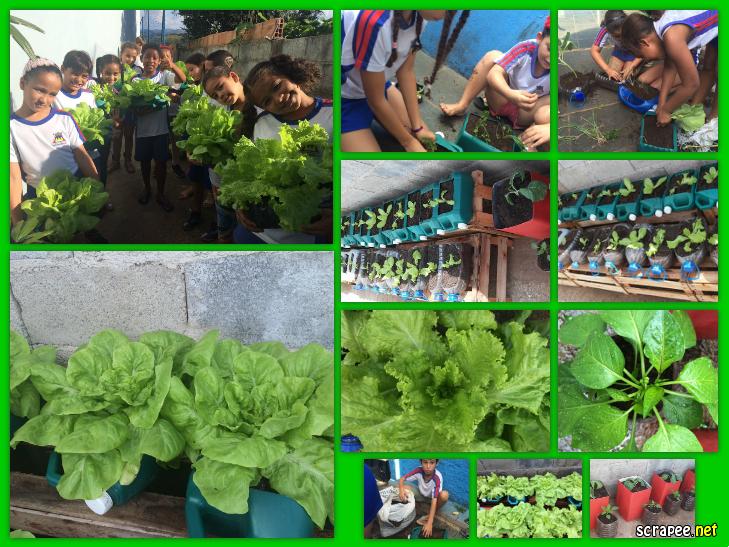 Populares Profª: Ivani Ferreira: Projeto: Horta escolar ,montada em garrafas  KY13