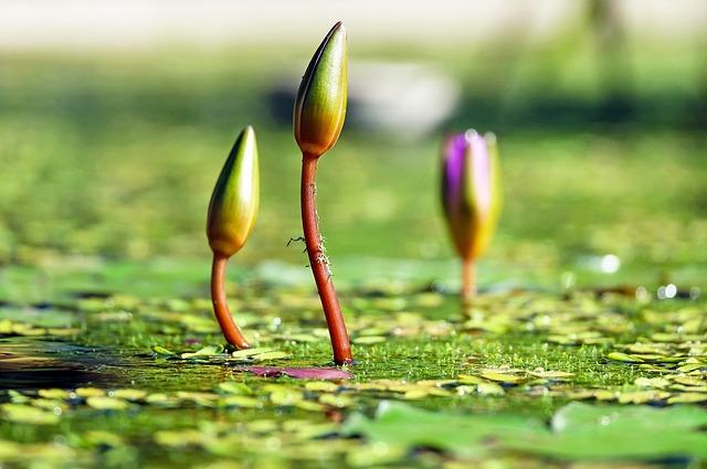 Le greffage et le bourgeonnement - horticulture