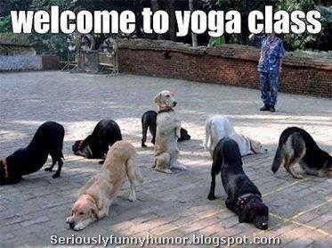 dogs-welcome-to-yoga-class