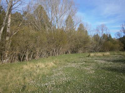 Terraza fluvial donde se sitúa el Molino de Canaleja, Campillos Sierra