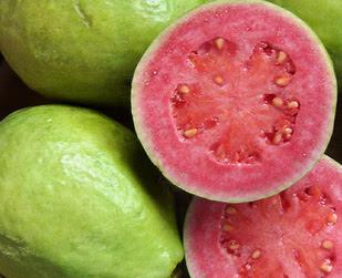 Natural Medicinal Plant Guava