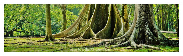 Kebun Raya Sambas - Kecamatan Subah