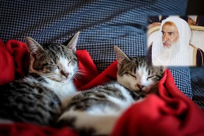 Kasih Sayang Syaikh Ibnu Utsaimin Kepada Kucing-Kucing
