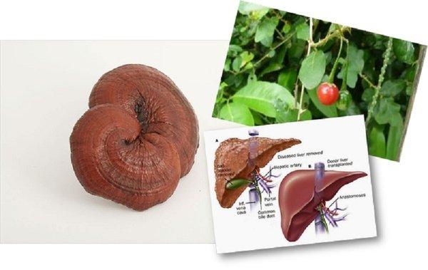 Công dụng của nấm linh chi giúp tăng cường chức năng gan