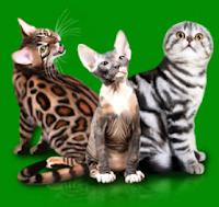 кошки по гороскопу