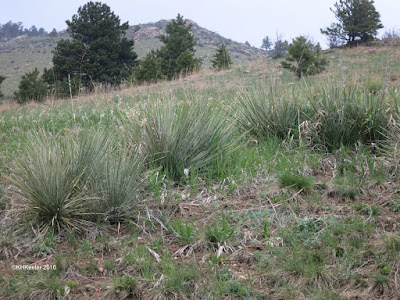 spring hillside, Horsetooth Mountain Park