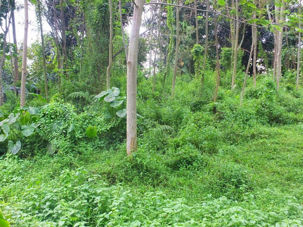 DSCF1823+(FILEminimizer) Jual Tanah Kebun Albasiah 6 HA Di Kec Pacet Jual tanah di cipanas