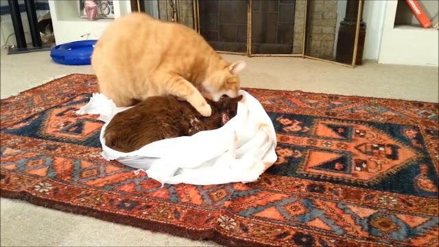 Mengharukan... Kucing Ini Sangat Sedih Karena Kehilangan Teman Baiknya Yang Meninggal Karena Ini...