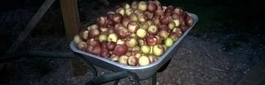 Apples in a wheelbarrow