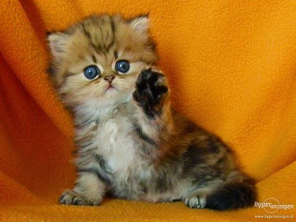 Images de chatons gratuit - Jeux de petit chaton gratuit ...